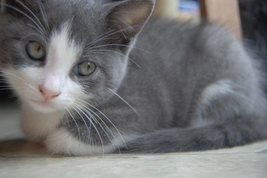 Baby Kitten by FalsePretences