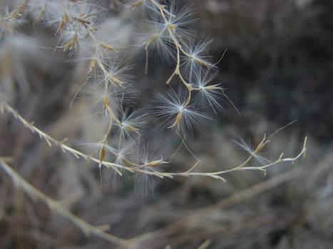 Plant closeup stock