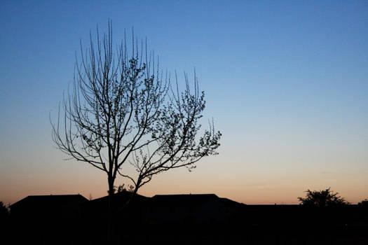 Tree Silhoette Stock