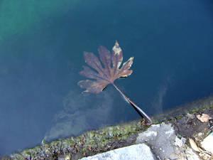Drowning Leaf