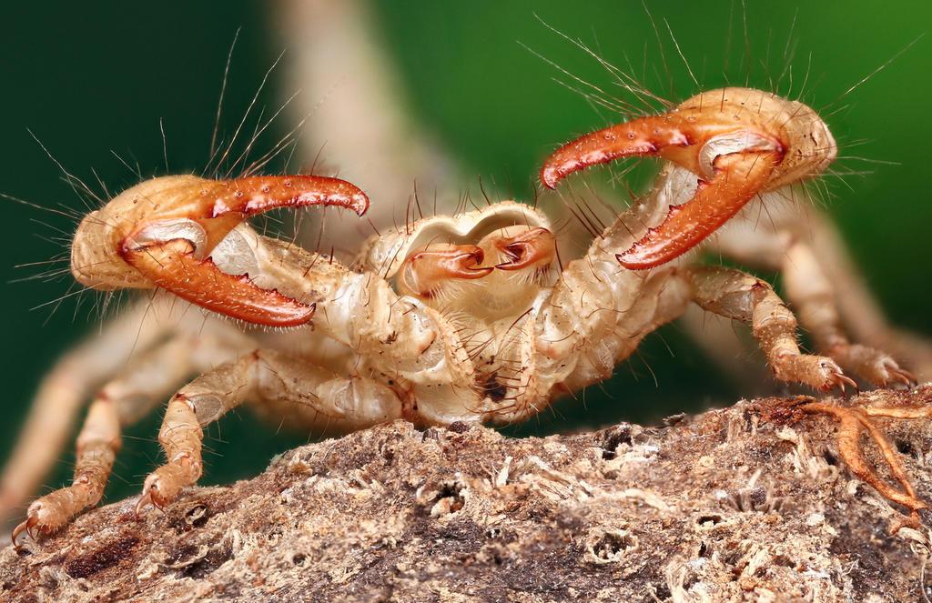 Scorpion by petrwolf