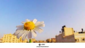 Yalow flowers