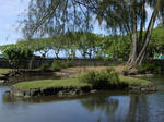 Pond Stock 3