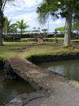 Pond Stock 4