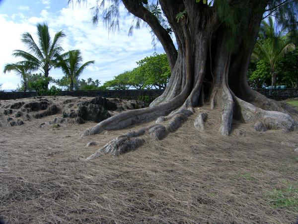 Tree Stock by delainestock