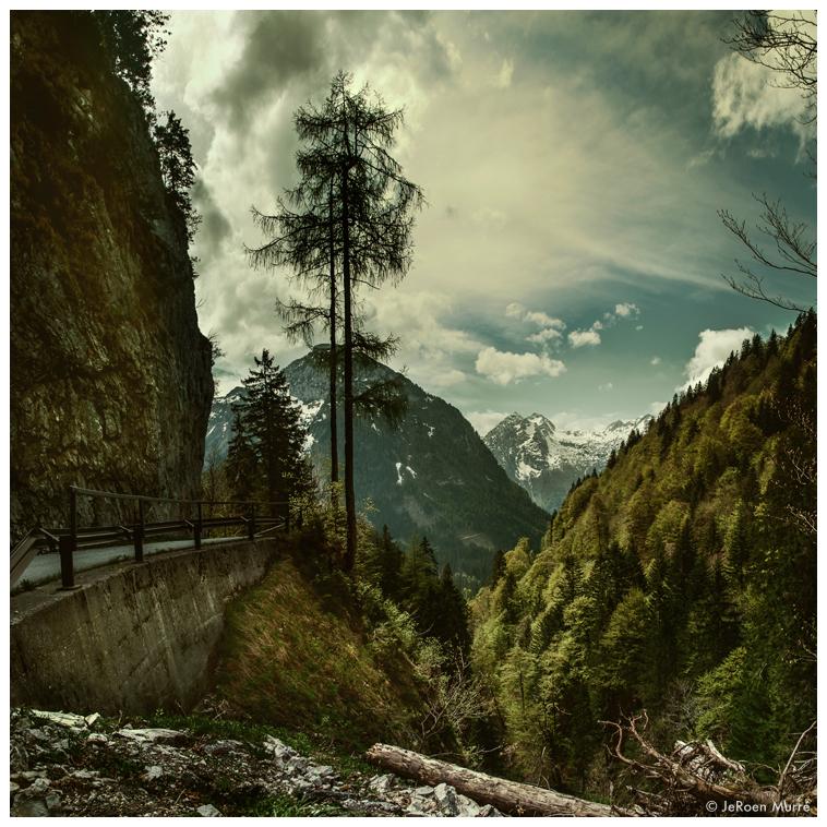 Austrian Pines by JeRoenMurre
