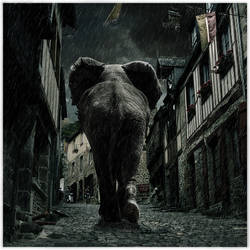 Elephant Street by JeRoenMurre
