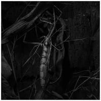 Creepy Crawly BW by JeRoenMurre