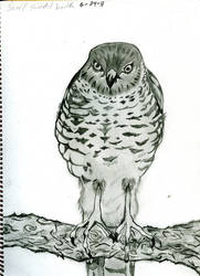 bird of prey by blackrrose2
