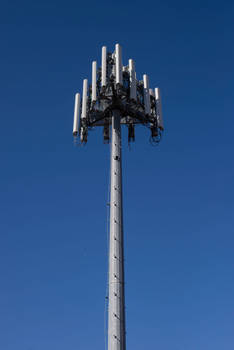 Cell Tower Blossom