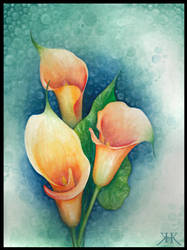 Calla Lilies by Paivatar