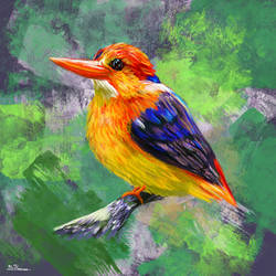 Colorful Oriental Dwarf Kingfisher by TheBRStory