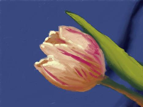 New Lesson 1 - Tulip