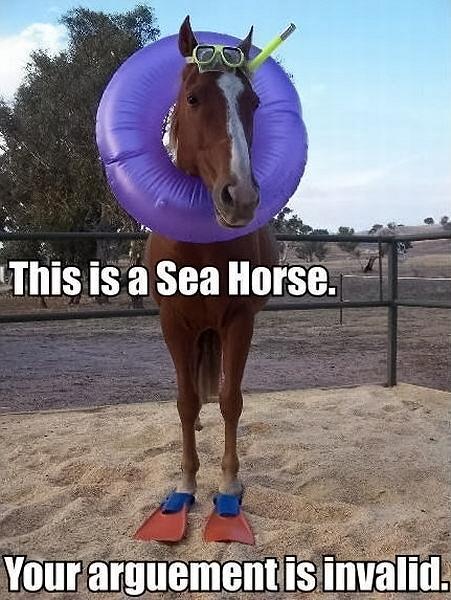 Sea Horse by splee568