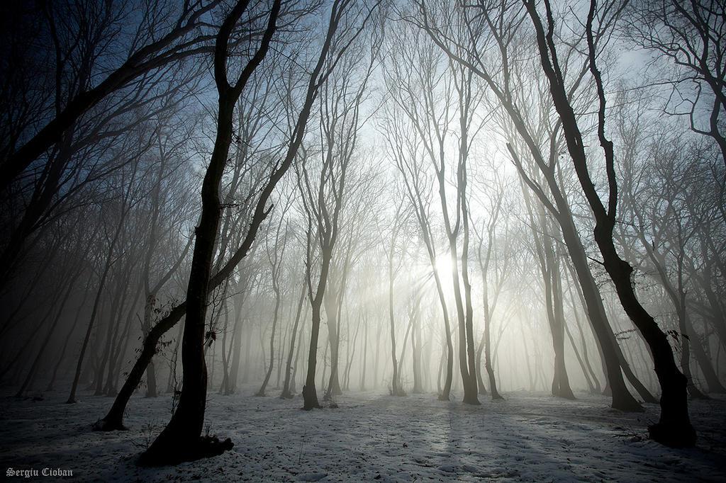 early mornin' fog by Sssssergiu