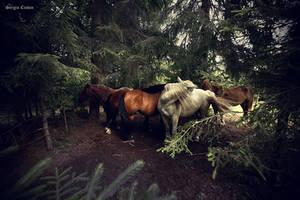 wild horses by Sssssergiu