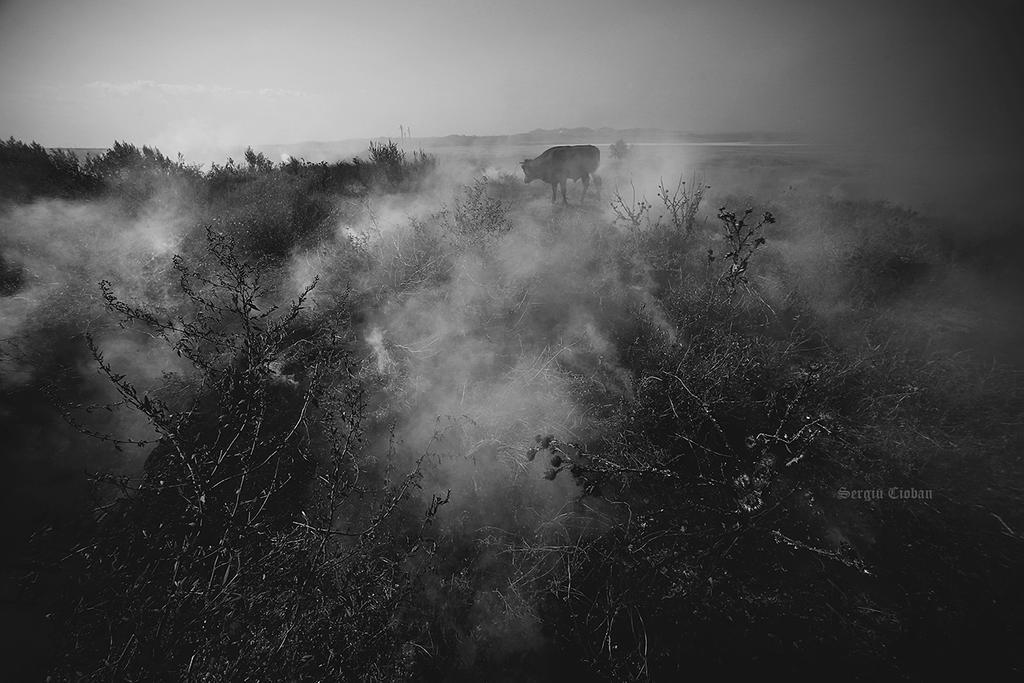 fire and smoke by Sssssergiu