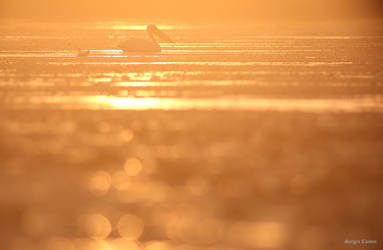 Danube Delta by Sssssergiu