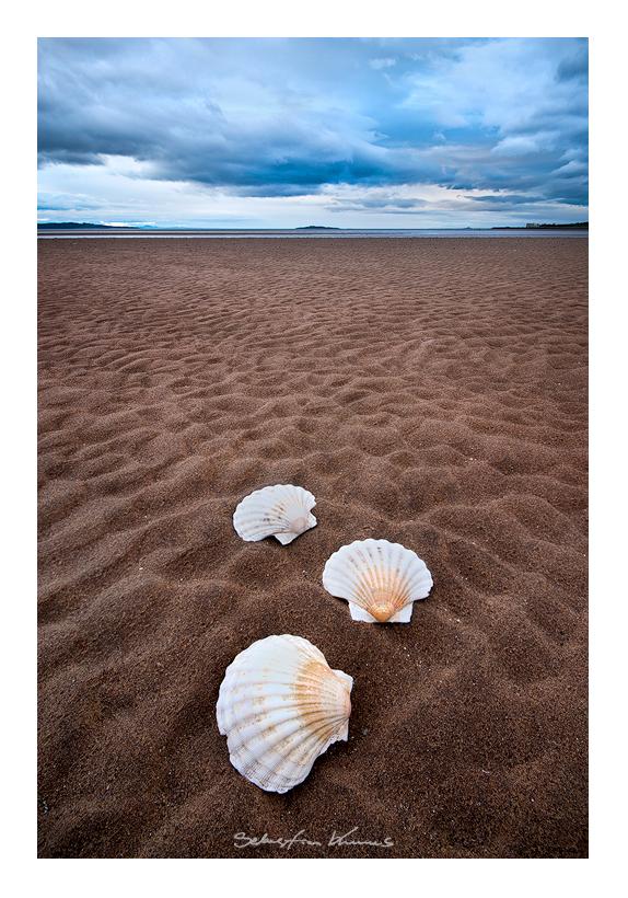 Shell by SebastianKraus
