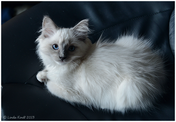 Blue Eyes by Isriana