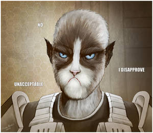 The Grumpy Cathar
