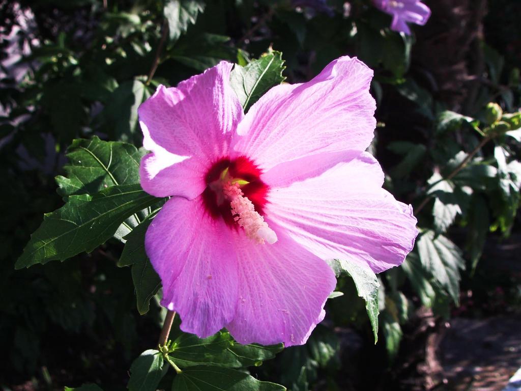 Flower by Hun-Ter