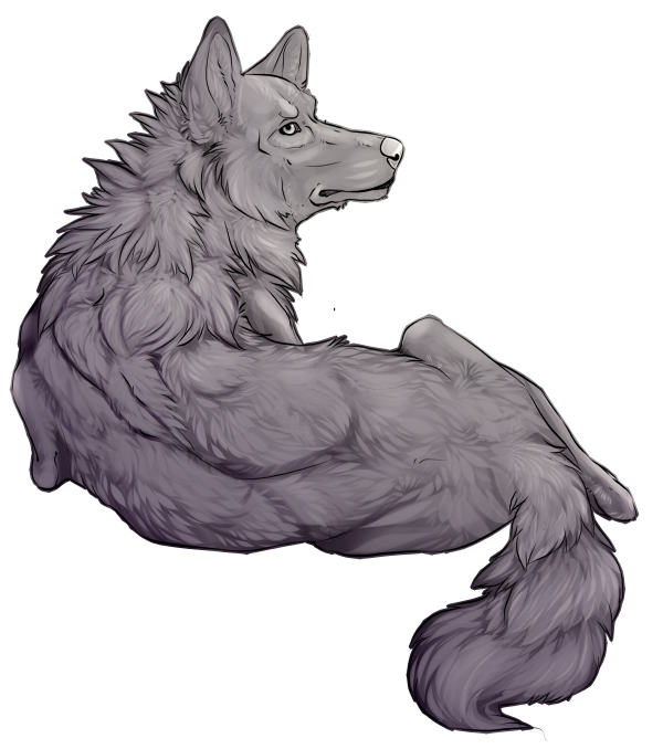 wolf front poses - 600×678