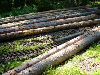 Logs in a forest by CyberKiller1