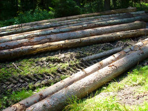 Logs in a forest
