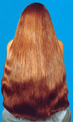 A Luxuriant Mane of Chestnut Brown by Brollywacker
