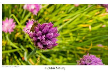 Sustain Beauty