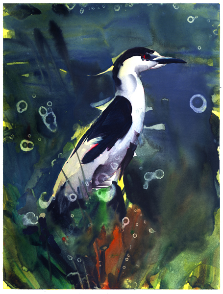 Night Heron by NathanFowkesArt