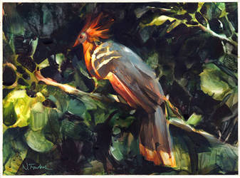 Hoatzin in Watercolor! by NathanFowkesArt
