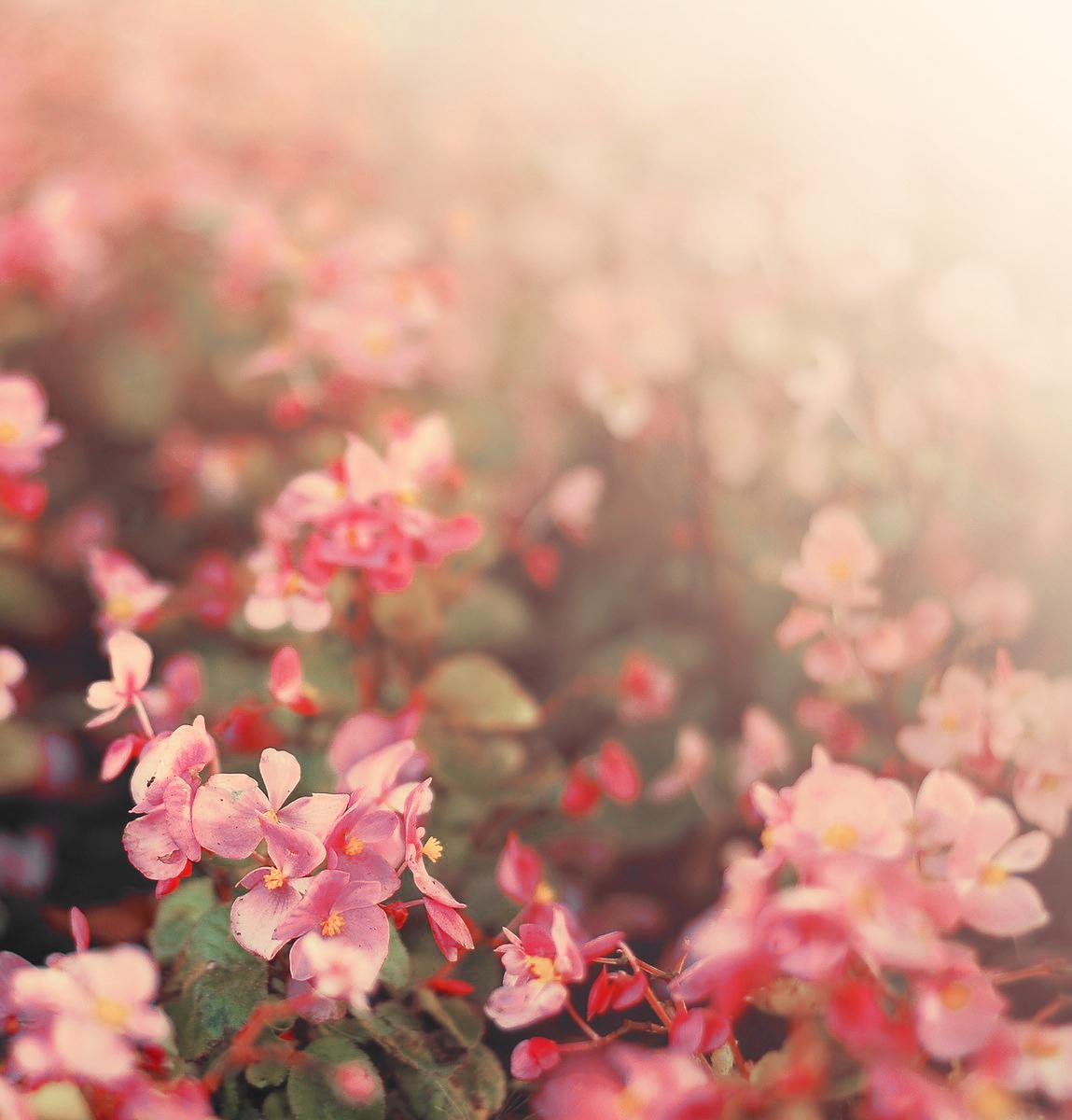 Little pink flowers by hoppetanikisu on deviantart little pink flowers by hoppetanikisu little pink flowers by hoppetanikisu mightylinksfo