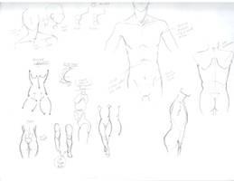 Body study by Otaku-Dragonboy