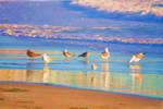 Bird Beach Reflections