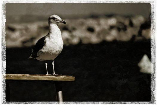 All Hail Captain Bird