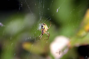 spider's lunch time by VitoDesArts