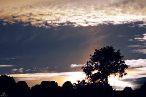 Sunset Tree by VitoDesArts