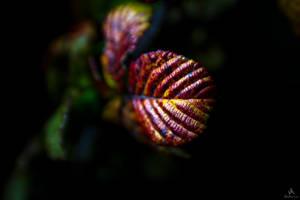 Reptilian leaf autumn-winter by VitoDesArts