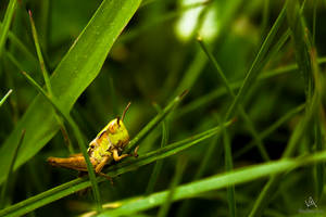 When you take away this blade of grass... by VitoDesArts