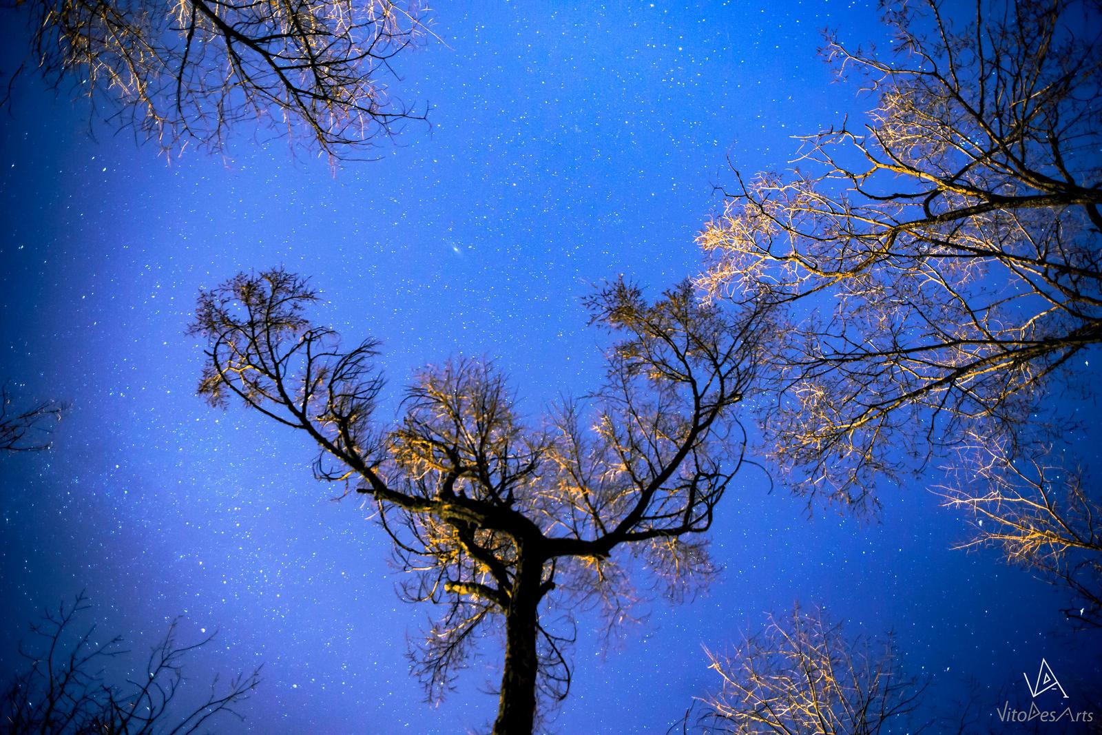 Tree many stars by VitoDesArts