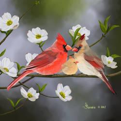 Cardinals and Dogwood