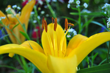 lil lily by sneekysneki
