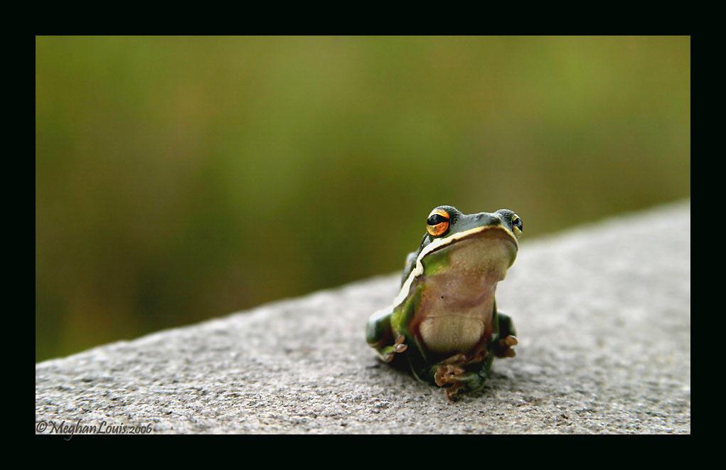 swamp frog 2 by strawberrykangaroo