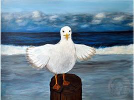 Seagull by NickMears