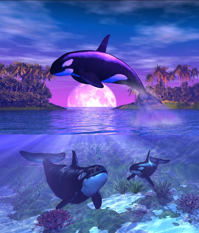 Orca Fantasies A Father S Joy By Shadowwind On Deviantart