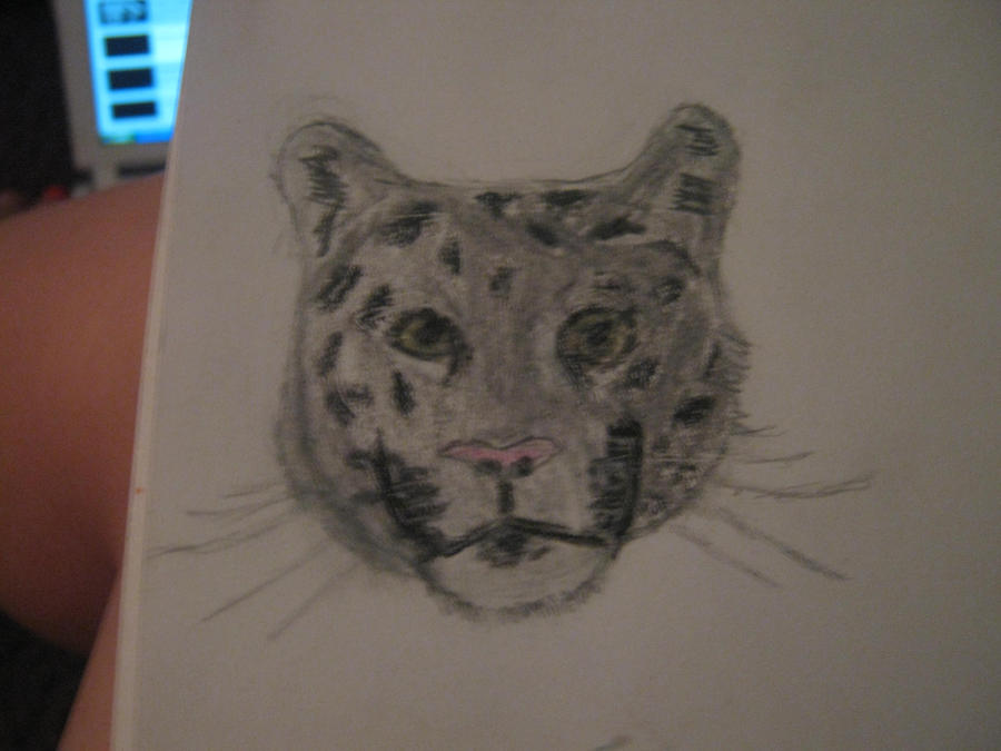 how to draw a snow leopard head