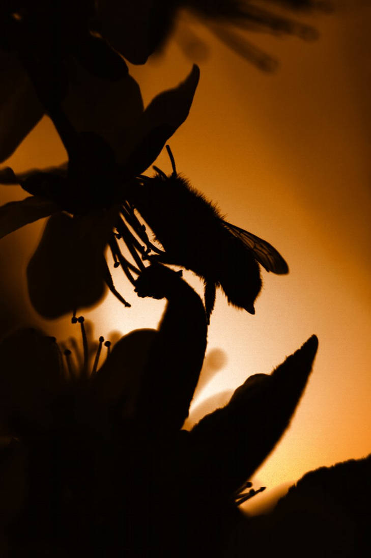 The last blossom of the day by mslijkhuis