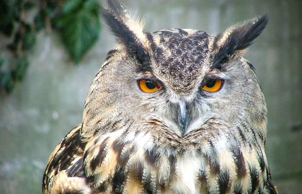 Morose Owl by LadyMini-Iago